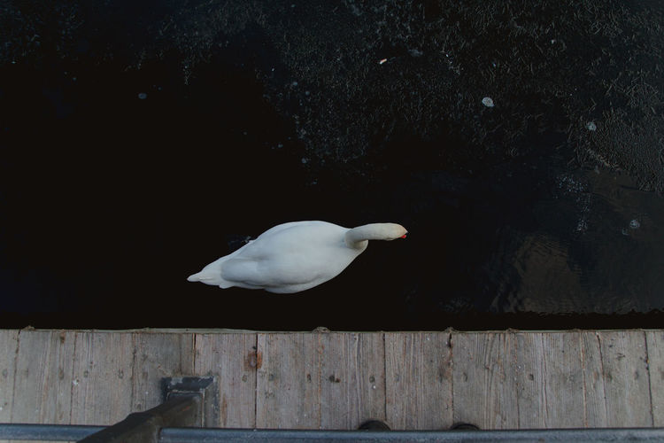 Seagull perching on wood