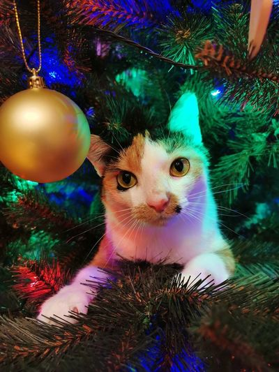 Portrait of cat on christmas tree