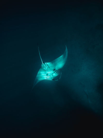 Manta Sea