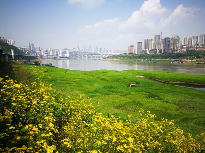 City Cityscape Flower Urban Skyline Water Skyscraper Beauty Apartment Sky Grass