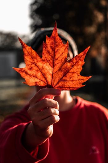 Close-Up Of Man Hand Holding Maple Leaf During Autumn