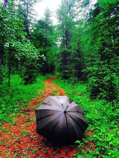 bogd uul rain Zoontog