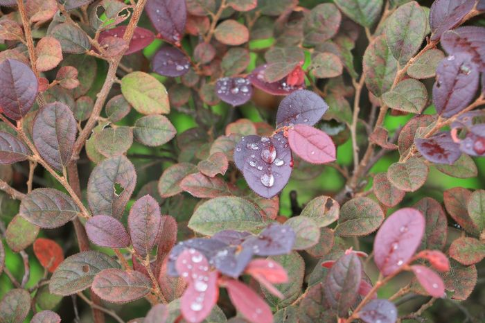 Water drop of on leaves beautiful nature select focus with shallow depth of field Background Leaf Green Liquid Beautiful Nature Foliage Plant Freshness Growth Life Nature Plant Rain Red Sapling Art Beauty In Nature Branch Brown Design Dew Drops Drop Environment Space Spring Water Wet