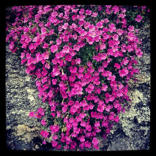 flowerpower.... Blumen Natur Lila Farbe