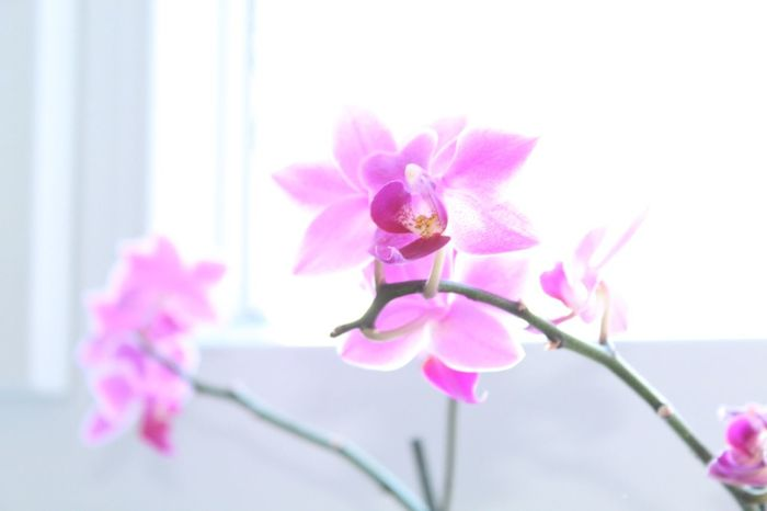 Orgichidee Growth Nature In Front Of Leaf No People Growing Beauty In Nature Close-up Plant Window Orchid Blossoms