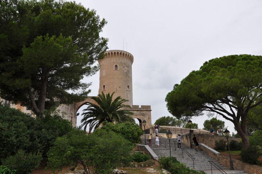 Architecture Built Structure Burg Mallorca No People Palm Tree Palma Palma De Mallorca Palme Palmen Park Travel Travel Destination