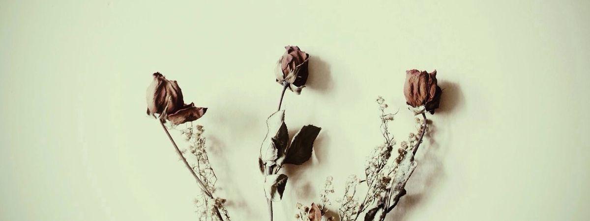 Forgotten love. Dead Rose Rosé Flowers