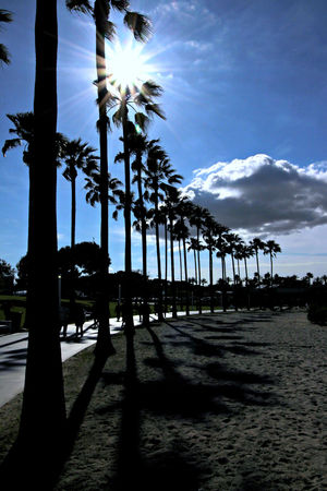 Summer is here. Beach Tree Sky Sunlight Palm Tree Cloud - Sky Outdoors Sea Nature Shadow Day Summer Vibes Summer Time  Long Beach, California USA