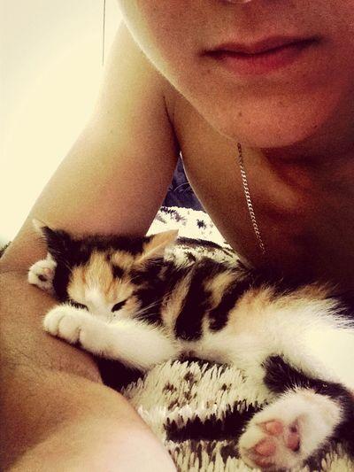 Котенок уснул после прогулки Cat First Eyeem Photo