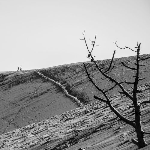 Taking Photos Hanging Out Check This Out Blackandwhite Black & White Getting Inspired People Dune Du Pyla Landscape Dead