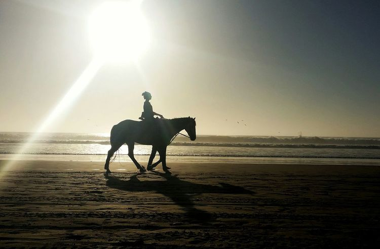 Riding on the beach of taghazout Summer Ride Beach Taghazout Taghazout Beach Vacations Mammal Animal Themes Animal Domestic Animals Sky Animal Wildlife Sunlight Land Side View Horse Silhouette Capture Tomorrow