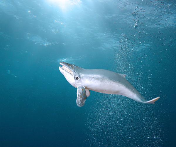 Whale swimming in sea