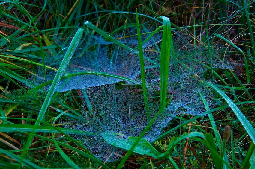 Spider Web Autumn Green Herbst Nature Water Drops Beauty In Nature Beauty In Nature Close-up Grass Green Color Nature No People Outdoors Spider Web Water