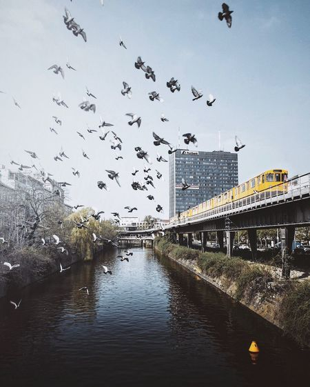 Architecture Large Group Of Animals Built Structure Bird Flock Of Birds Flying Building Exterior Animal Themes Bridge - Man Made Structure Sky No People Animals In The Wild City Day Water Outdoors Nature