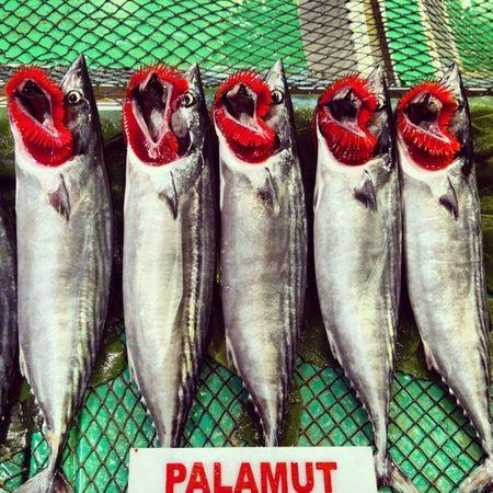 Fish Palamut