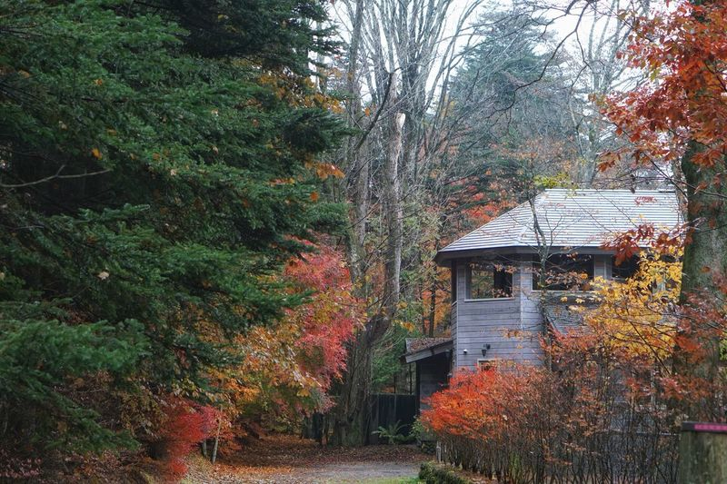Forest Getting Inspired Plant Tree Architecture Building House Autumn Nature Green Color Outdoors