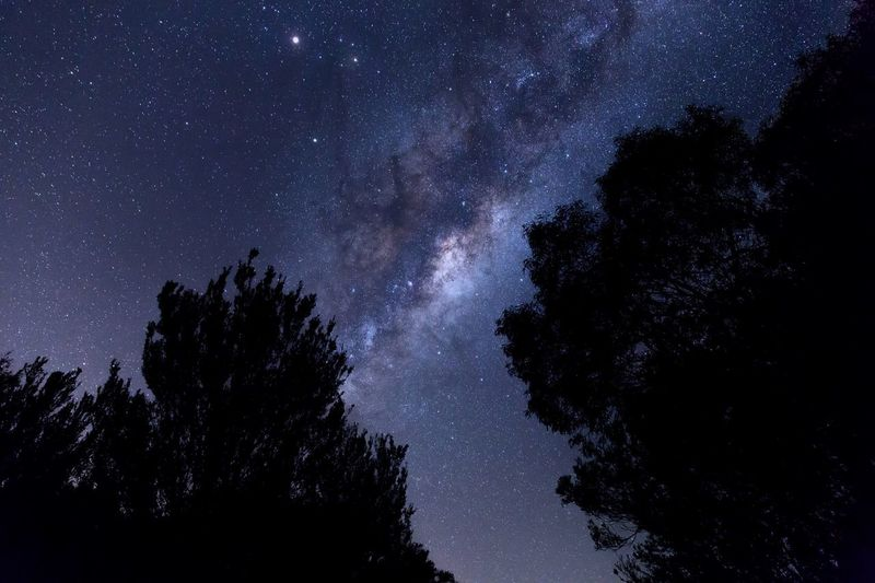 Milkyway core and tree silhouette. Silhouette Night Lights Universe Landscape_photography Landscapes Milkyway The Great Outdoors - 2016 EyeEm Awards Night Stunning Long Exposure EyeEm Best Shots Landscape_Collection Australian Landscape Astronomy Hello World Melbourne