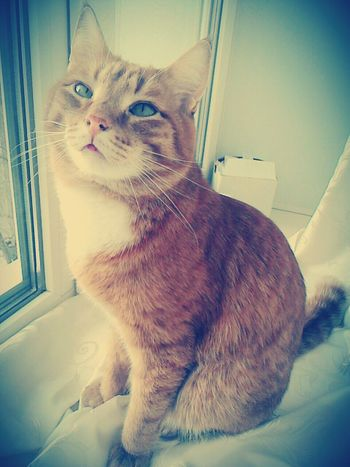 My Life Beauty Around Us Light And Shadow Darkness And Light Lovely Cat Color ♥ Morning