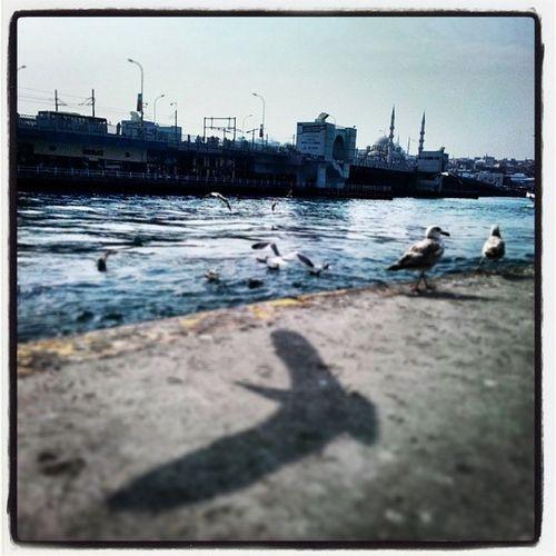 Golgelerin Gucu Adina Eminönü gunaydin galata turkey turchia turkiye objektifimden oan benimkarem benimkadrajim istanbuldayasam instasyon follow likeforlike instaturkey manzara marti beyaz