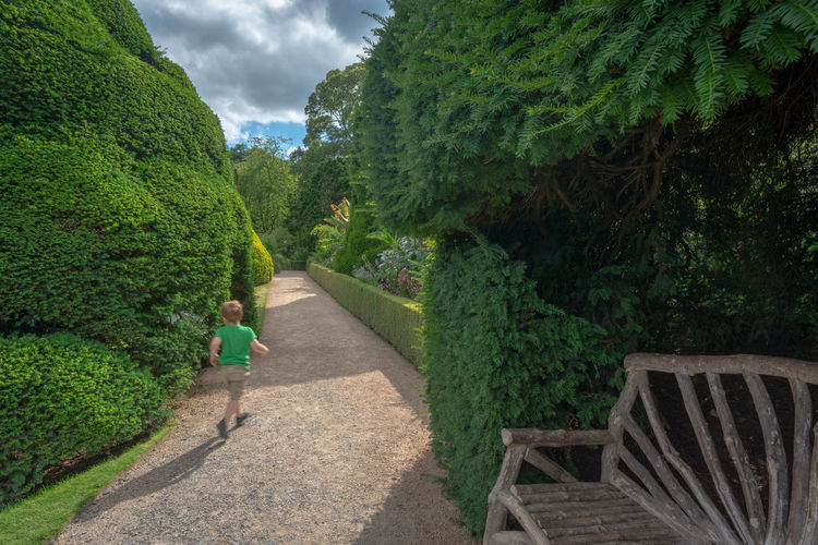 Boy walking on plants by trees against sky
