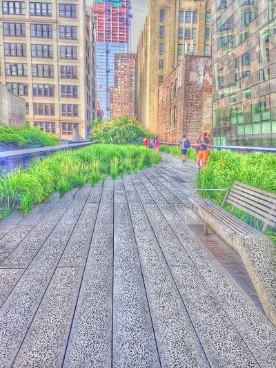 The High Line Highline Highlinepark New York New York City The Best Of New York NYC Park