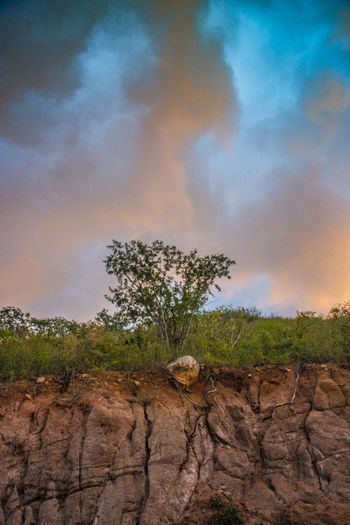 ARBOLITO Cloud - Sky Sky Plant Tree Beauty In Nature Nature Tranquil Scene Tranquility Scenics - Nature Rock No People Environment Rock - Object Growth Landscape Outdoors Arid Climate Solid Non-urban Scene Land Day Csl LosCabos
