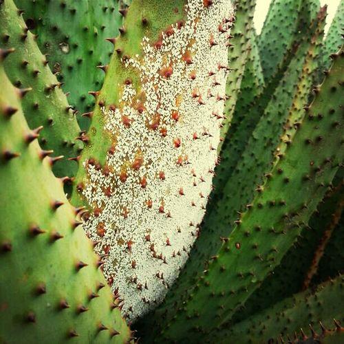 Textures Plants South Africa Aloe Indigenous  Suikerbosrand