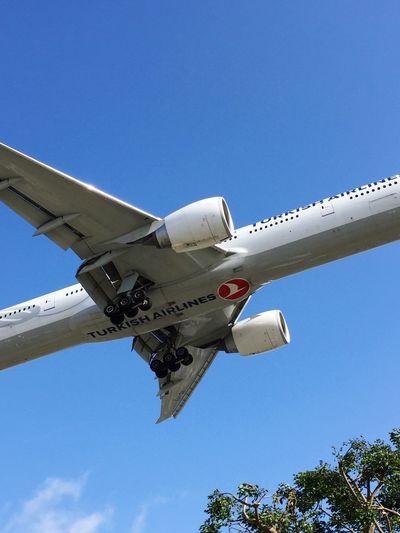 Lax Airport La AirPlane ✈ Turkey Airlines