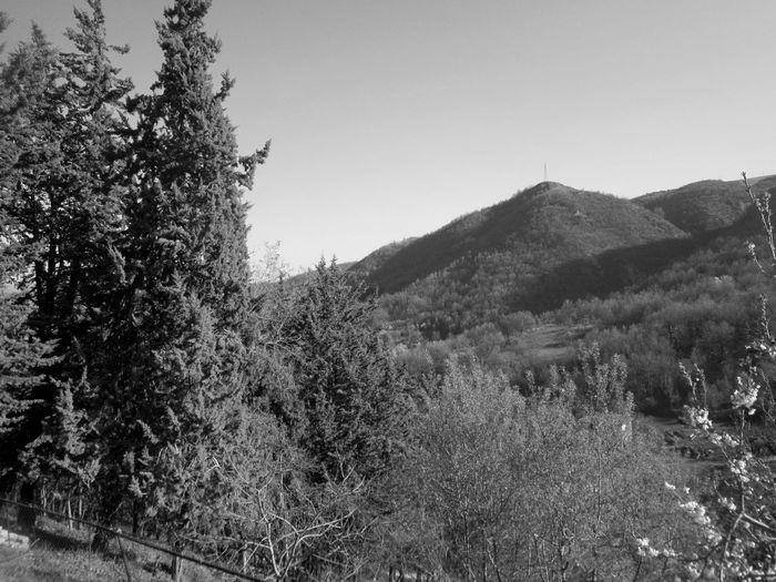 #lucania #basilicata #spettacolo #villagelife #campagna #passeggiata #sunset #sun #clouds #skylovers #sky #nature #beautifulinnature #naturalbeauty #photography #landscape Day Nature No People Tree