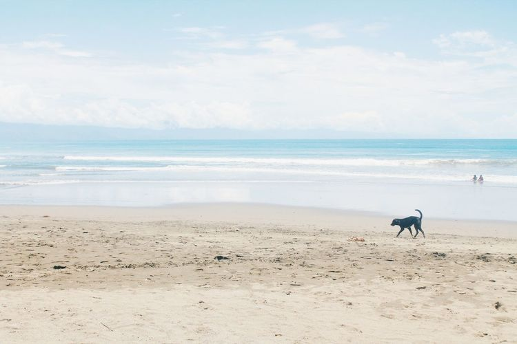 Dog At The Beach Ocean Philippines VSCO Vscocam Travel Aurora Baler Shore Baler Water Pets Wave Sea Beach Dog Sand Bird Full Length Blue
