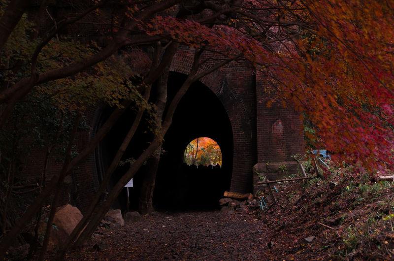 Arch bridge during autumn