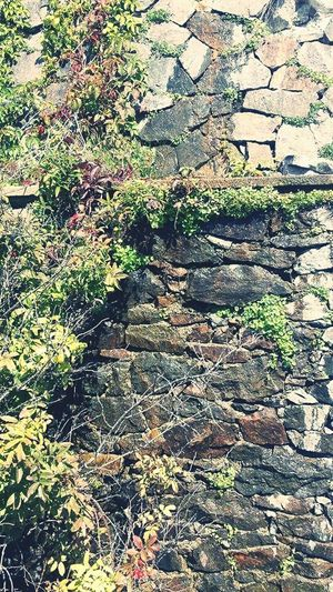 Stone Wall Overgrown Nature Photography Nature_collection New Hampshire Mountain Life