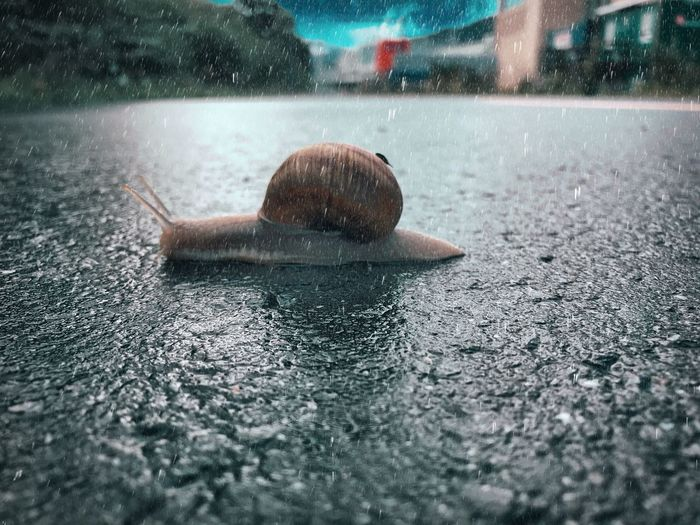 Close-up of snail on wet surface
