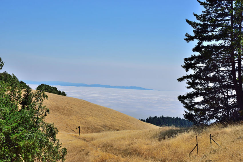 Mount Tamalpais State Park 14 Mount Tamalpais State Park Ele: 2,576 Feet Highest Peak Of The Marin Hills Covers 25,000 Acres 21 Trails 50 Miles Of Hiking/biking Trails Rock Spring Trail Nature Nature_collection Beauty In Nature Landscape_Collection Landscape_photography Golden Brown Hills Marin Headlands Marine Layers! Evergreens Fog Silhouettes Eastbay Hills Hiking Mt. Tam Hiking Adventures Hiking ❤️ Blue Summer Sky Landscape Plant The Great Outdoors - 2018 EyeEm Awards