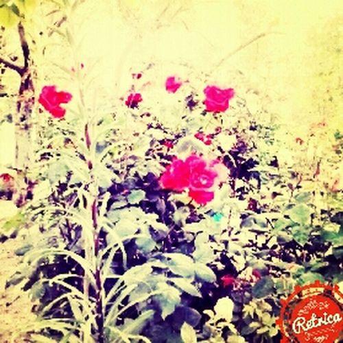 babannemin cicekleri ❤ My GrandMother ❤ Flovers♥ Happy Naturel