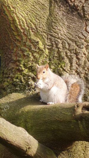 Enjoy Bread on tree