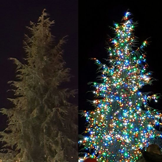 Before and after Chriatmas tree lighting Christmas Christmas Tree Tree Celebration Christmas Decoration Decoration Christmas Lights Illuminated Tradition Holiday - Event Christmas Ornament Night No People Winter Tree Topper Black Background Outdoors Midnight Spartanburg, SC Christmas Festival Out And About Love My Life  Christmas Is Coming A Dickens Christmas