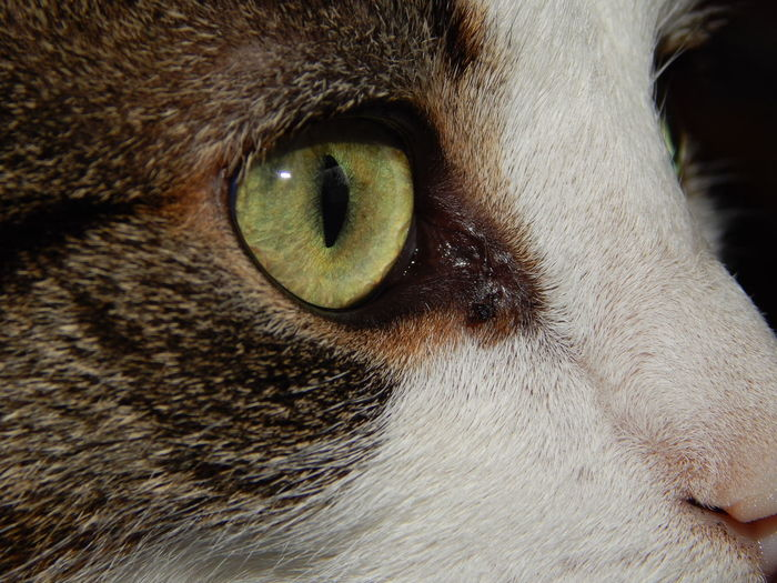 (c) ScanJack Animal Head  Animal Themes Close-up Domestic Animals Front View Home Indoors  Pets Relaxing