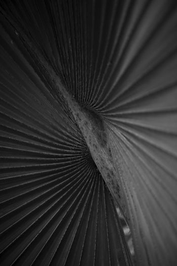 Detail shot of feather