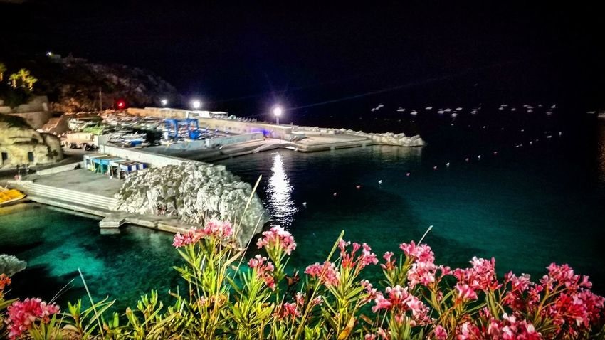 Night Water Arts Culture And Entertainment Illuminated Outdoors Nature No People Beauty In Nature Flower Nautical Vessel Sky City Astrology Sign Salento Mare Sea Castro Castromarina Notte Night Estate Summer Estate2017 Summer2017