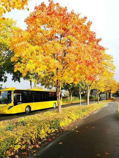 Colerfull Outdoors Mode Of Transport Tree Transportation Autumn Change Yellow No People Nature Sky Day Horizontal Yellew Colorful Strong Colors Beauty In Nature Beautiful Orange Color TakeoverContrast