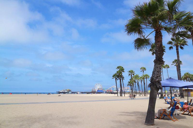 Beach Land Tree