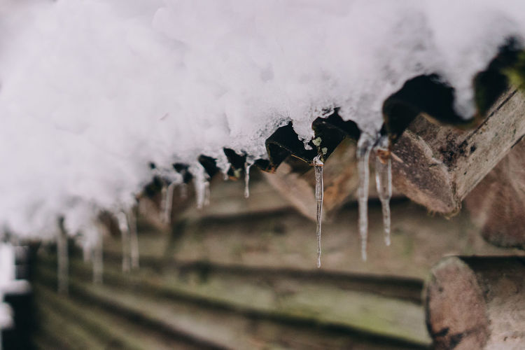 Close-up of icicles on wood during winter