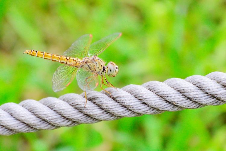 Close-Up Of Dragonfly On Rope