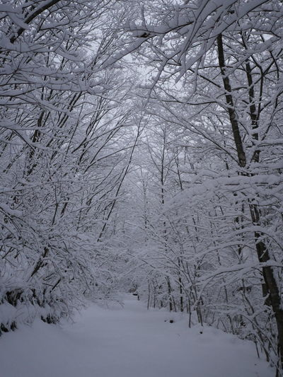Path Shades Of Winter Beauty In Nature Cold Temperature Nature No People Outdoors Snow Tree Winter