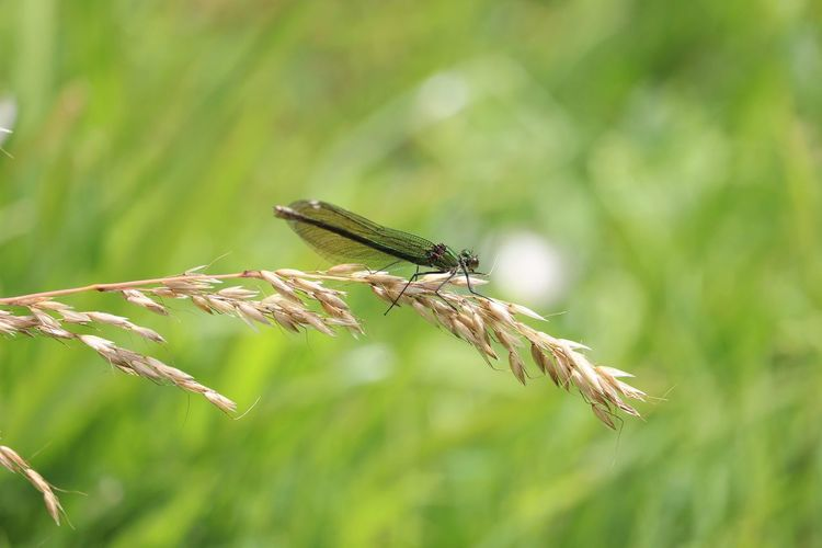 Perching Insect