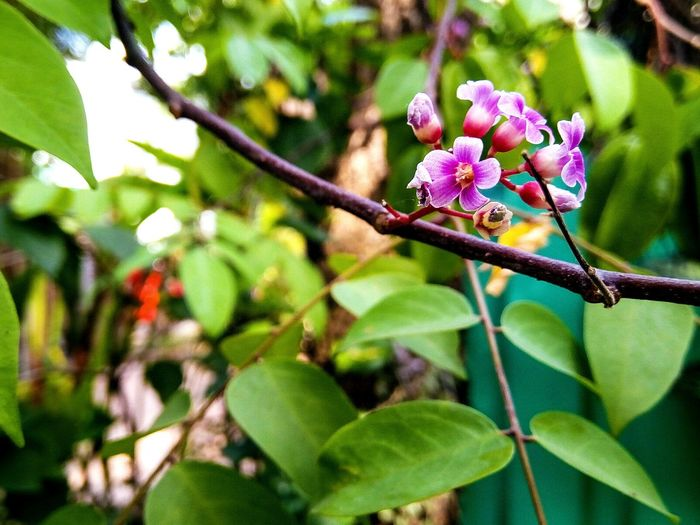 Flower Growth Nature Beauty In Nature Tree Day Branch Outdoors Fragility Plant Focus On Foreground Petal Freshness Pink Color No People Flower Head Leaf Green Color Close-up Blooming