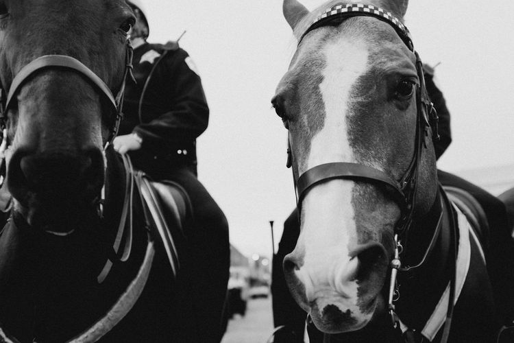 Adult Adults Only Army Army Soldier Blackandwhite Close-up Day Horse Men Monochrome Only Men Outdoors People Police Real People Sky Standing Teamwork Togetherness Two People Young Adult