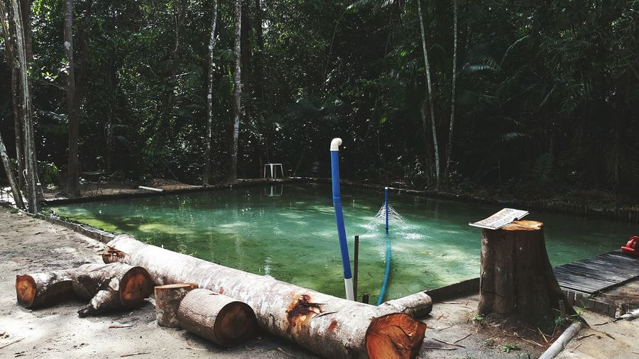 Wooden post in lake by trees in forest