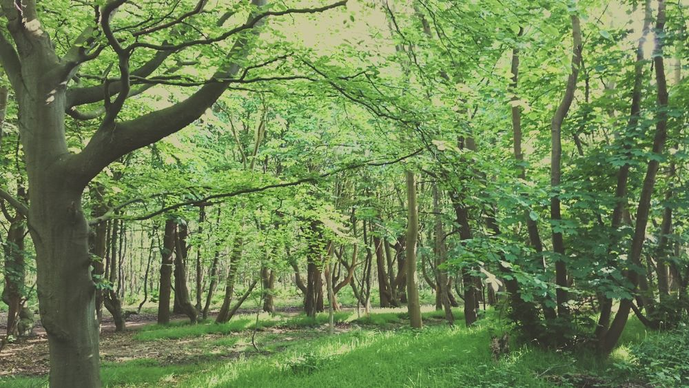 A Beautiful Forest in Domburg  , The Netherlands Trees Nature Green